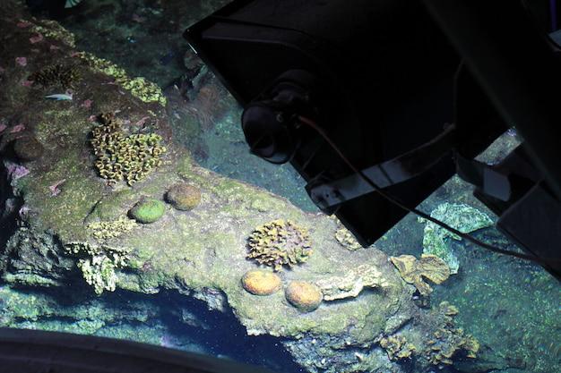 Ein fisch im aquarium