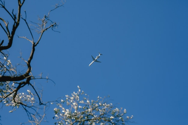 Ein flugzeug am himmel, ein blühender baum steht im vordergrund
