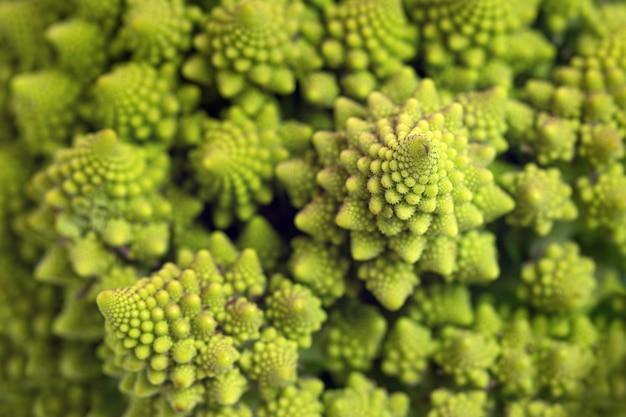 Ein fragment von romanesco-brokkoli. ungewöhnliches gemüse. makroaufnahmen.