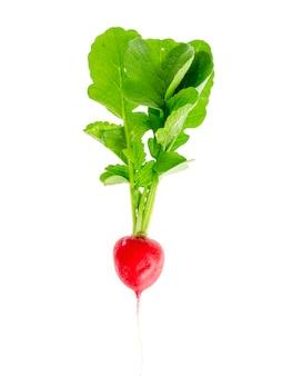 Ein frischer roter rettich mit den grünen blättern getrennt auf weiß.