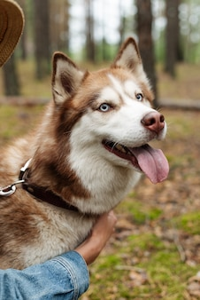 Ein fröhlicher hund an der leine. husky zeigt seine zunge. ein spaziergang mit einem husky im wald. wandern mit einem hund in der natur. braune schale