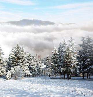 Ein frostiger tag ist in den bergen