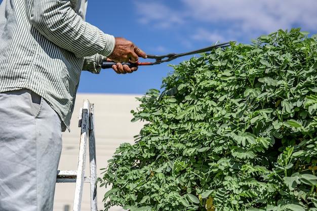 Ein gärtner im garten mit einer hütte schneidet einen baum mit igeln gegen den himmel