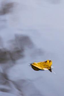 Ein gelbes espenblatt im kalten wasser