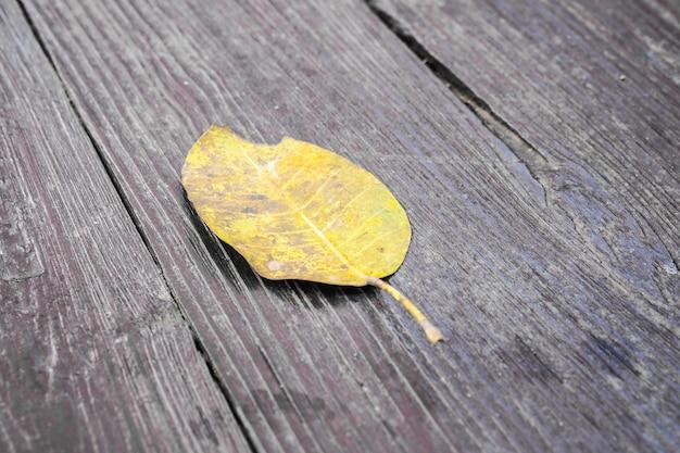 Ein gelbes trockenes blatt auf holzfußboden in brauner farbe,