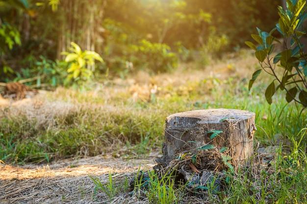Ein geschnittener baumstumpf im natürlichen gartenwald thailand