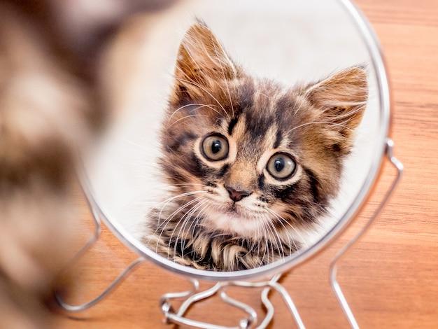 Ein gestreiftes kätzchen schaut neugierig in einen runden spiegel
