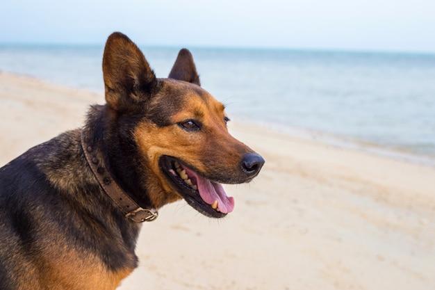 Kostenlose partnersuche mit hund