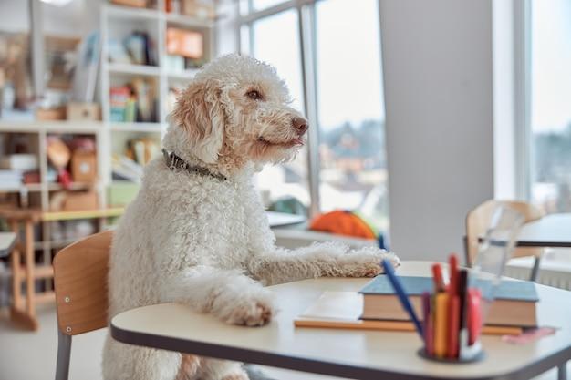 Ein glücklicher hundeschüler sitzt im klassenzimmer der grundschule und bereitet sich auf den unterricht vor