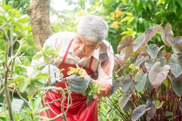 Ein glücklicher und lächelnder alter asiatischer älterer mann beschneidet zweige und blumen für ein hobby nach der pensionierung in einem haus.