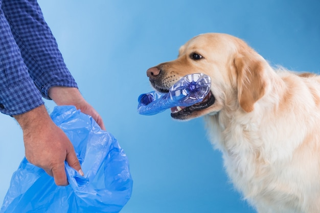 Ein golden retriever, der eine plastikflasche aufhebt respekt für die umwelt. plastikflaschen sammeln
