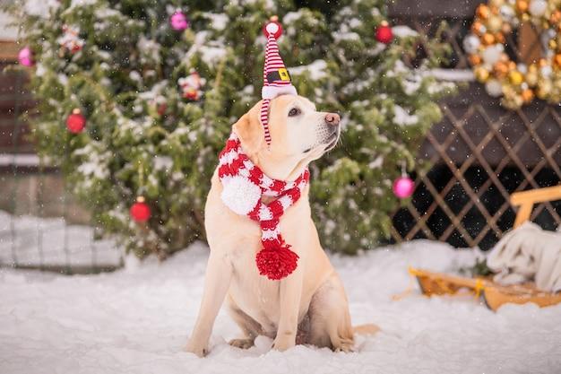 Ein goldener labrador in einem schal sitzt bei einem schneefall im winter im innenhof eines wohnhauses neben einem geschmückten weihnachtsbaum und schlitten.
