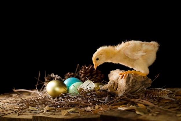 Ein goldenes ei und ein babyküken in einem nest