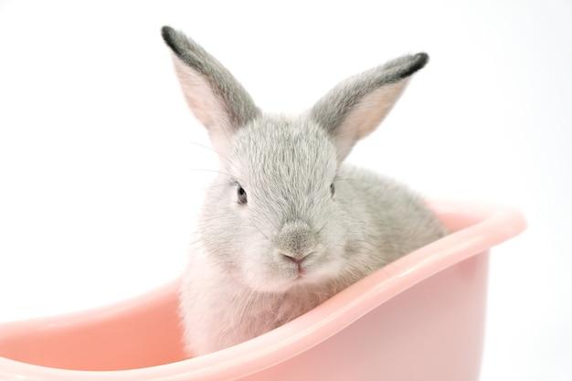 Ein grauer hase in einer rosa badewanne auf einem weißen