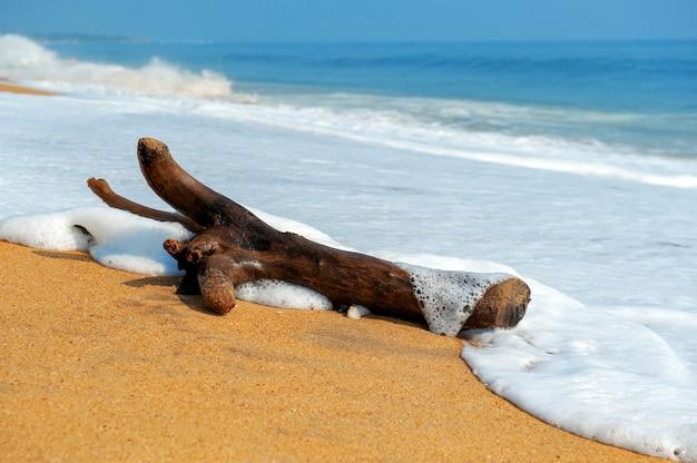 Ein großer ast wird an einem tropischen strand von wellen gewaschen