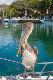 Ein großer grauer pelikan sitzt ruhig auf einem boot