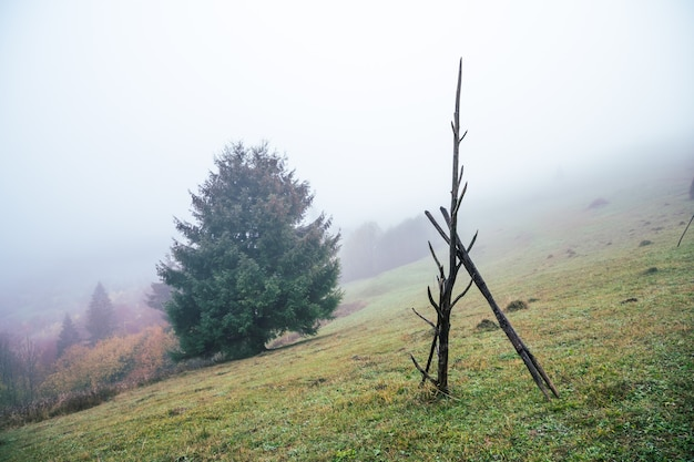 Ein großer nasser stapel steht bei nassem wetter auf einer grünen wiese inmitten von dichtem grauem nebel