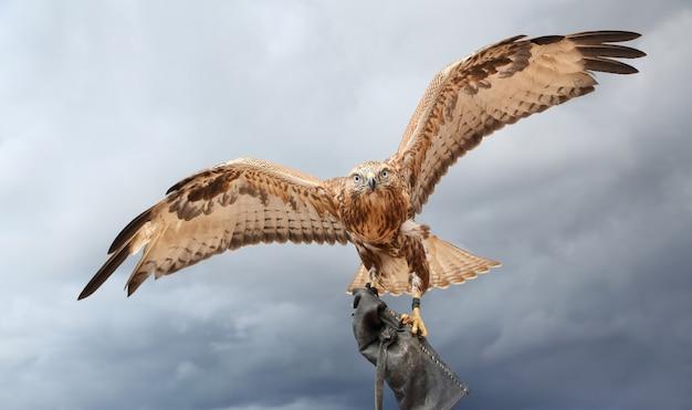 Ein großer raubvogel