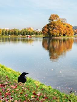Ein großer schwarzer rabe posiert in einem stadtpark