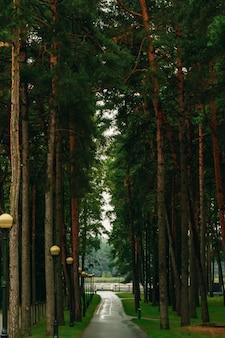 Ein grüner baumtunnel mit licht am ende, an einem schönen sommertag in einem park.