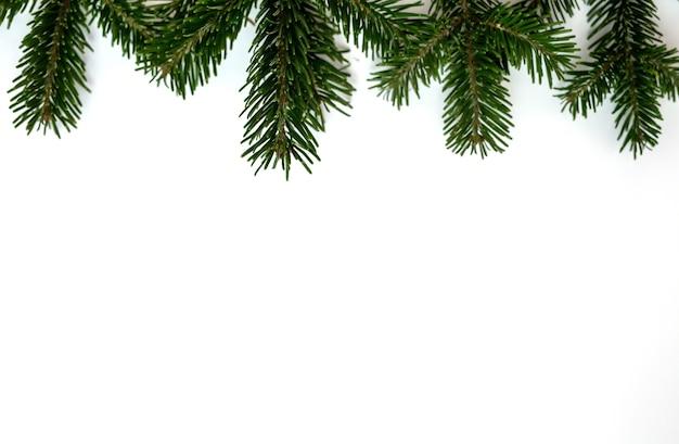 Ein grüner weihnachtsbaumzweig auf einem weißen hintergrund in der ecke des rahmens.