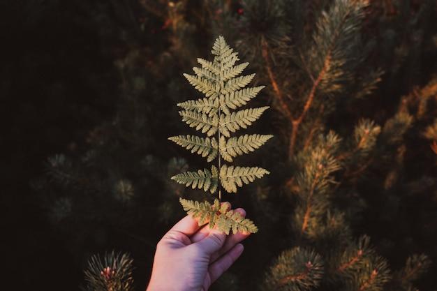 Ein grünes farnblatt in einer weiblichen hand im herbstwald