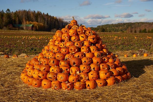 Ein haufen halloween-kürbisse mit einem feld im hintergrund.