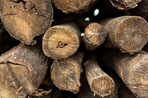Ein haufen trocken gesägter bäume. brennholz für den ofen oder kamin.