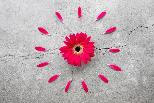 Ein helles rotes gerberagänseblümchen mit kreisförmigem rotem blumenblattmuster