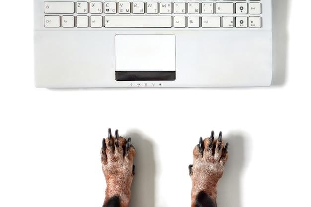Ein hund arbeitet an einem modernen weißen büroschreibtisch mit laptop.