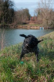 Ein hund, der am rand des wassers spielt