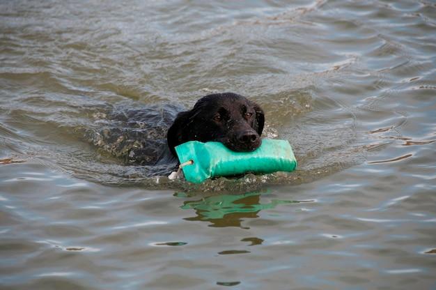 Ein hund, der in etwas wasser paddelt