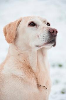 Ein hund in aufmerksamkeit