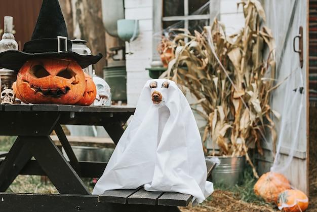 Ein hund in einem geisterkostüm auf der veranda eines hauses, das dekoriert wurde, um eine halloween-party zu feiern