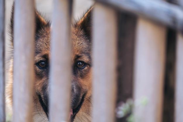 Ein hund in einem käfig
