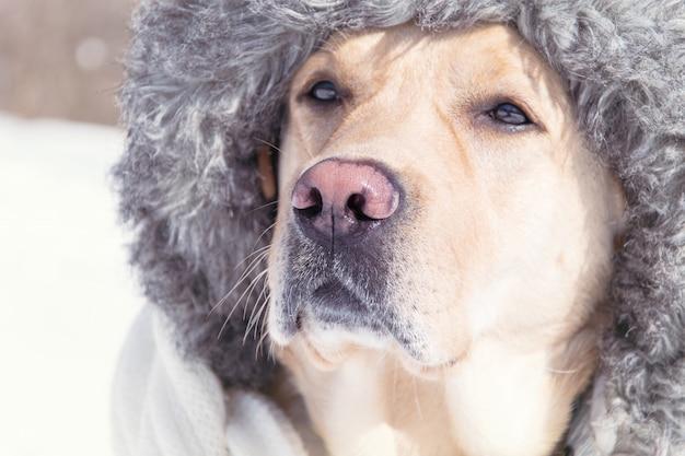 Ein hund in einer pelzmütze im winter.
