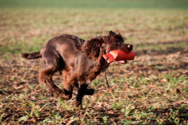 Ein hund mit einem kauspielzeug