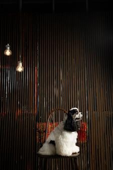 Ein hund starrt auf etwas mit schwarzem hintergrund