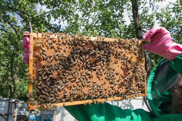 Ein imker hält einen rahmen mit der honigbienenfamilie.
