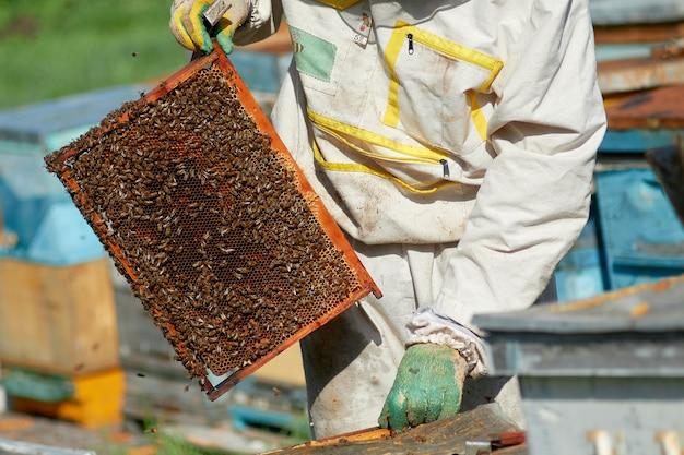 Ein imker in einem bienenhaus kontrolliert bienenstöcke mit bienen