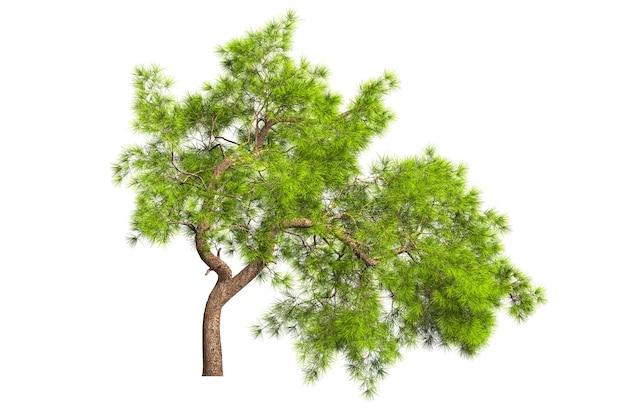 Ein immergrüner nadelfichtenbaum mit einer üppigen krone und einem gekrümmten querstamm auf einem weißen hintergrund. sich abkapseln. stock 3d-illustration.
