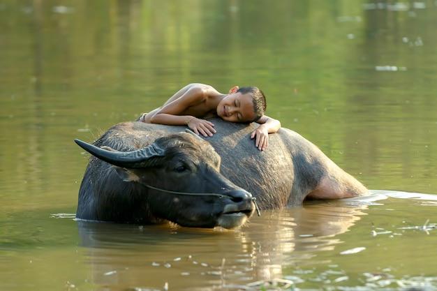 Ein junge in einem ländlichen gebiet von thailand, das mit einem büffel beim baden für seinen büffel schläft