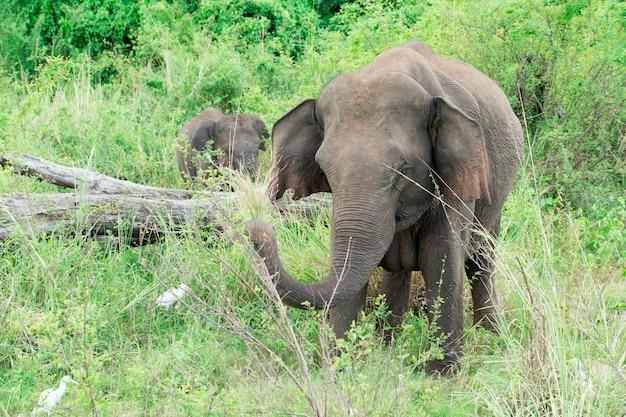 Ein junger elefant direkt neben einem erwachsenen.