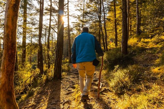 Ein junger mann in einer blauen jacke auf einer wanderung durch den wald eines nachmittags bei sonnenuntergang. artikutza wald in oiartzun, gipuzkoa. baskenland