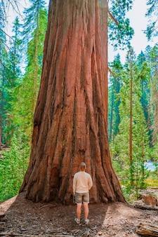 Ein junger mann mit rucksack spaziert im malerischen sequoia national park usa
