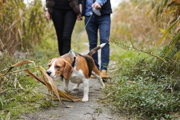 Ein junges paar geht mit einem hund im park spazieren