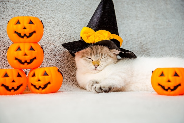 Ein kätzchen einer katze der britischen rasse für halloween oder thanksgiving im schlaf in einem schwarzen hut