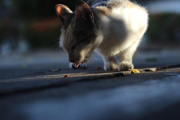 Ein kätzchen isst essen auf dem boden mit schatten