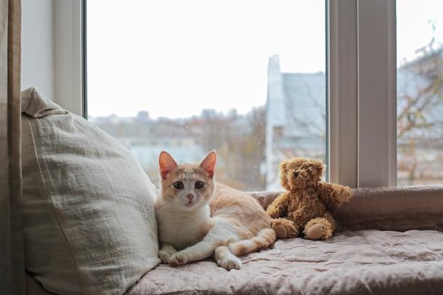 Ein kätzchen sitzt auf einer fensterbank und sieht neugierig aus