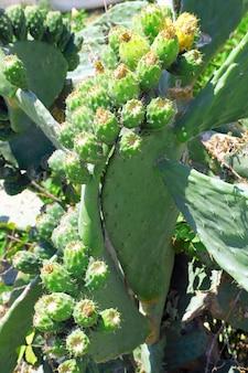 Ein kaktus im tropischen land.